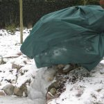 Bescherm je planten tegen de winter