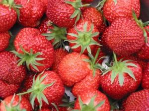 Zelf lekkere aardbeien kweken