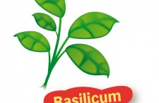 Basilicum uit de tuin