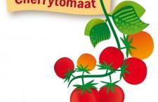 Zelf cherrytomaten kweken