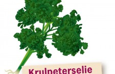 krulpeterselie
