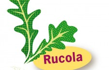 Rucola