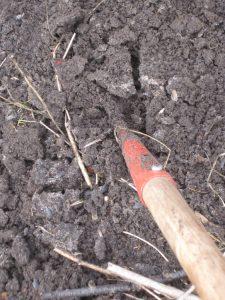 Schoffelen maakt de grond los, en geeft zaden de kans op te komen.