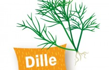 dille