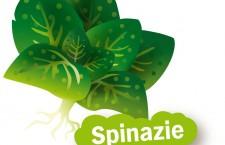 Spinazie kweken uit zaad